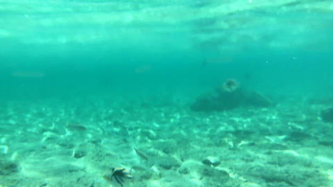 4K video,Lots of fish swimming underwater Footage