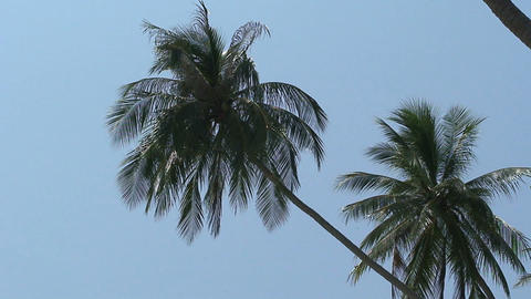 Palmtrees Stock Video Footage