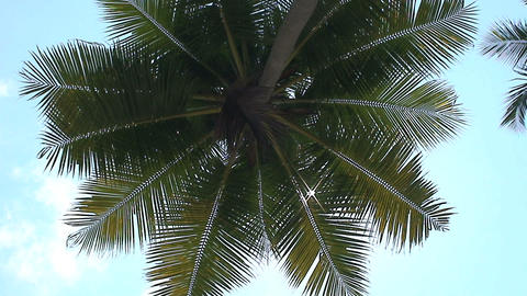 Palmtree ad sunshine Stock Video Footage