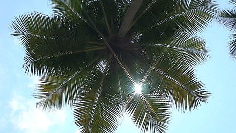 Palmtree ad sunshine Footage