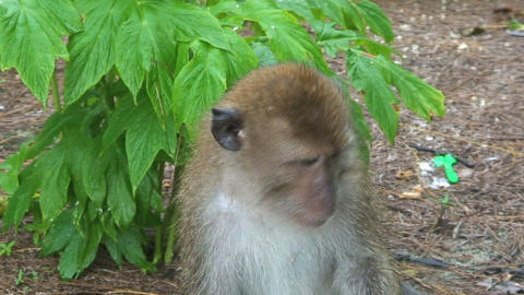 Monkey Stock Video Footage