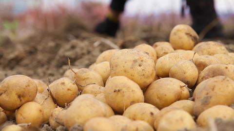 potatoes Footage