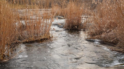 landscape with river and reed Stock Video Footage