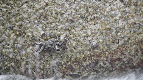 Crab crawling on rock under waves Stock Video Footage