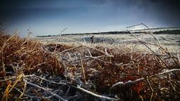 Winter Runners Footage
