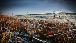Winter Runners Stock Video Footage
