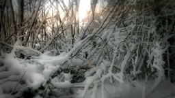 Winter Tree Branches Stock Video Footage