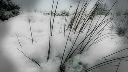 Winter Grass Stock Video Footage