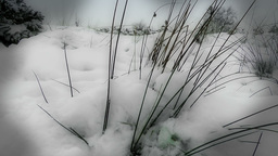 Winter Grass Footage