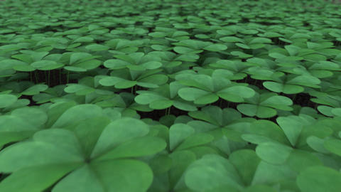 Clover Field Stock Video Footage
