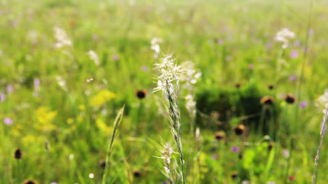 Field of grass Stock Video Footage