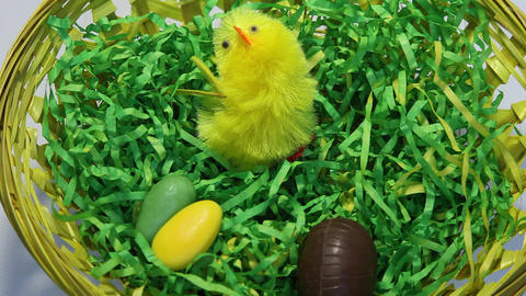 Timelapse of easter nest getting filled Stock Video Footage