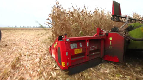 Thresher Harvesting Maize stock footage