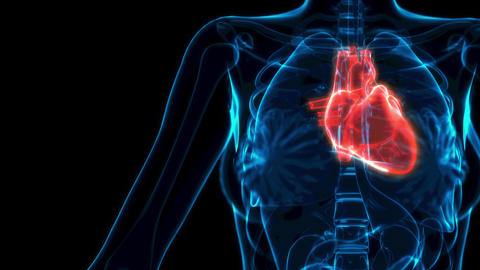 human heart illness xray view, cg medical 3D animation Animation