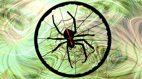 Crusader spider weaves its web. Animated black spider on green blurry natural ba Animation
