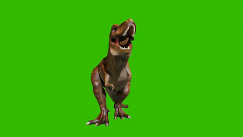 Dinosaur Tyrannosaurus roars in a animation. Reptile in front of green screen. Animation for Animation