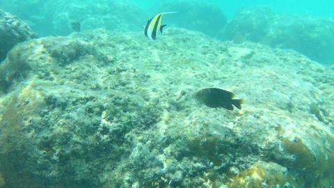 4K video,Lots of fish swimming underwater Footage