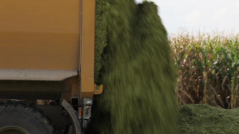 Tipping out corn silage Stock Video Footage