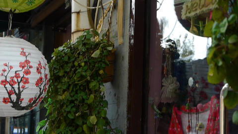 vines & plum lanterns at the store,glass door reflect... Stock Video Footage