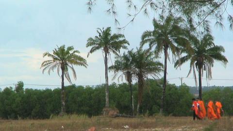 monks palmtree Stock Video Footage
