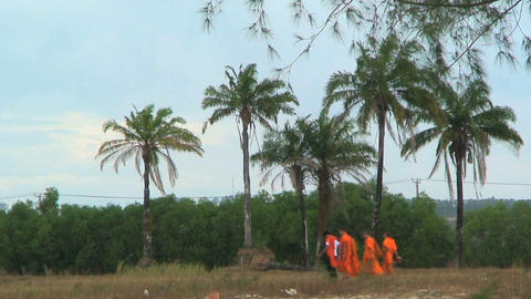 monks palmtree Stock Video Footage