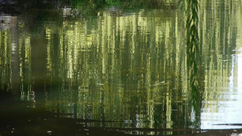 willow reflection in lake,moving water waves Stock Video Footage