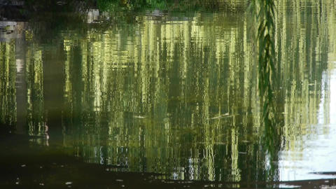 willow reflection in lake,moving water waves Footage