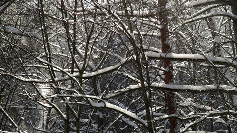 snow covered forest Animation