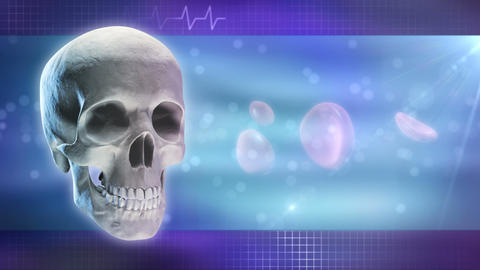 Anatomy and Medicine Background Animation