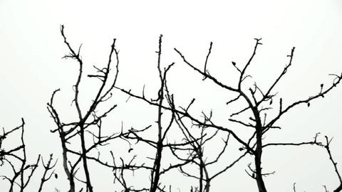 tree branches Stock Video Footage
