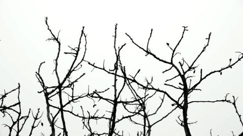 Tree  Branches stock footage