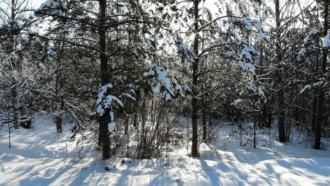 aerial shot flying through winter snow crown trees with sun shining sun beams Live Action