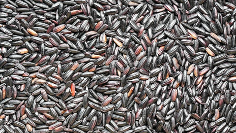 Close-up black rice seeds. dry black rice abstract background. slider motion Live Action