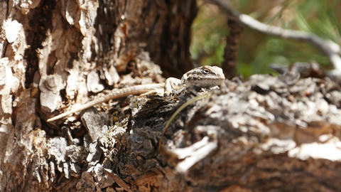 Lizard basking animal reptile Live Action