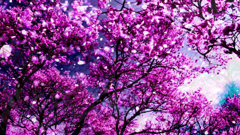 Cherry Blossoms 34745 Animation