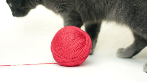 domestic cat playing with ball over white background Stock Video Footage