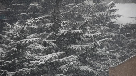 falling snowflake,house & forest Stock Video Footage