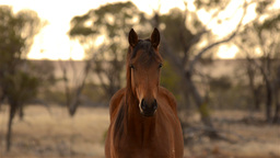 Horse Staring Straight at the Camera Stock Video Footage