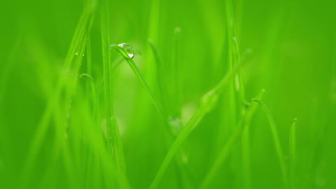 Grass after rain Stock Video Footage