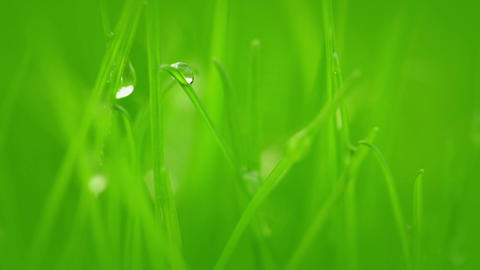Grass after rain Footage