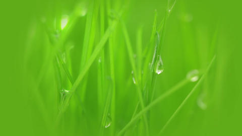 Fresh grass, dew and sun ray Stock Video Footage