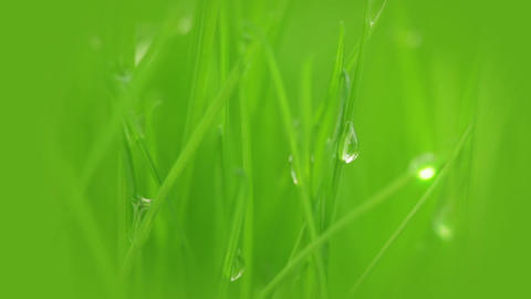 Fresh grass, dew and sun ray Footage
