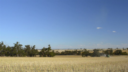 Harvesting a Swathed Canola Crop on an Australian Farm Stock Video Footage