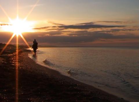 Horseman on a beach Stock Video Footage