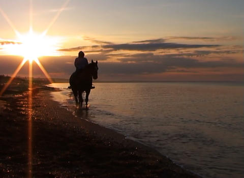 Horseman on a beach Stock Video Footage
