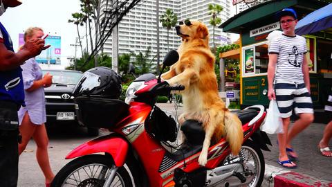 Dog on Motorbike Stock Video Footage
