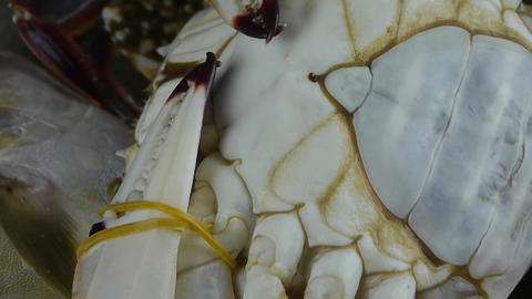 Delicious crab within dial plate.fisheries ice frozen Stock Video Footage