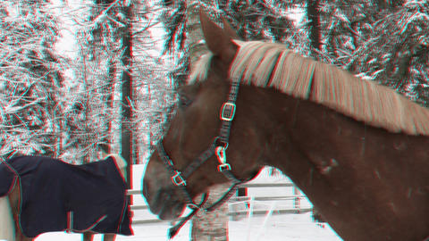 Horses in a paddock eat hay in winter 1ana Stock Video Footage