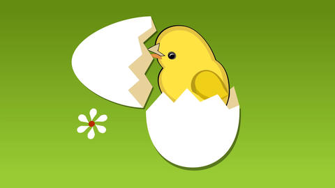 Cute yellow chick breaks the shell of egg, flowers on meadow, chicken sings a me Animation