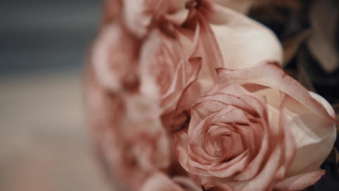 Close-up Bouquet with Pink Roses. Rose-Red buds. Close-ups, Moving Focus, Camera Live Action